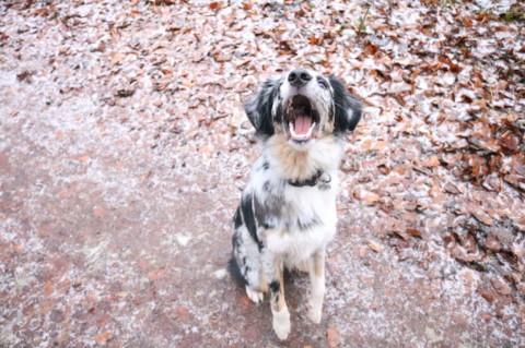Von fliegenden Keksen und verrückten Hunden