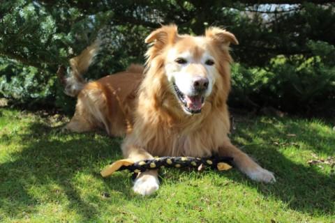 Meine Gedanken zum Thema Handfütterung bei Hunden