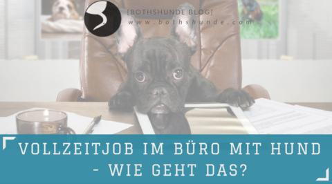 Vollzeitjob im Büro mit Hund – wie geht das?