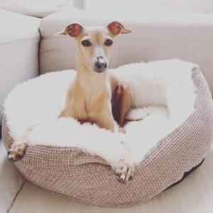 Körbchen Hunde stylisch