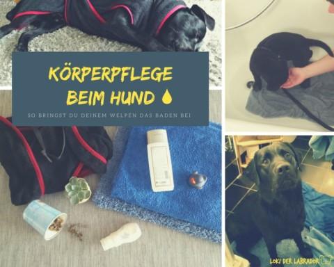 Körperpflege beim Hund: So bringst Du Deinem Welpen das Baden bei [Teil 1]