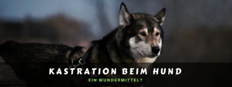 Kastration beim Hund – ein Wundermittel?