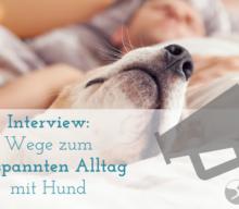 Interview – Zappelhunde