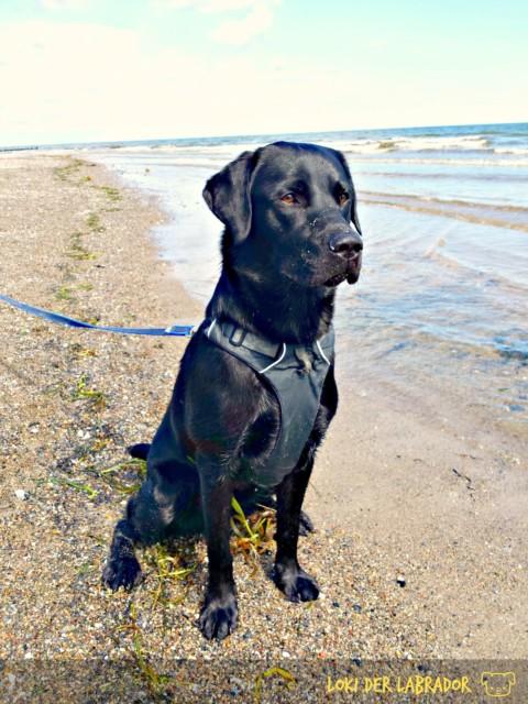 5 Tipps für einen entspannten Urlaub mit dem Hund (an der Ostsee)