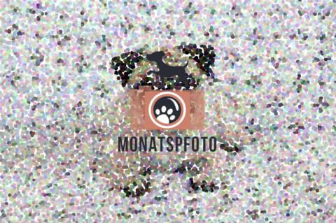 Monatspfoto | Die liebe Liebe