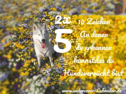 5er Doppel – 10 Zeichen an denen du erkennst, dass du Hundeverrückt bist
