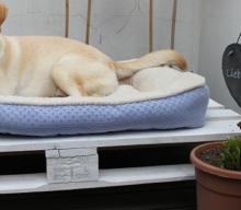 Man reiche mir das Wasser oder DIY Outdoor-Lounge für Hunde