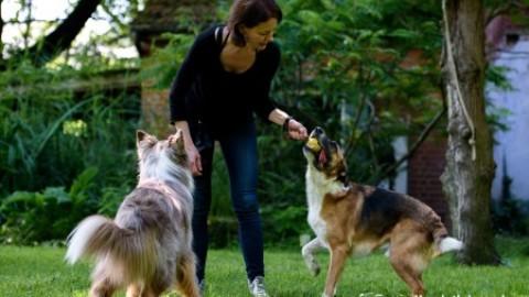 Mehrhundehaltung – entspannt mit Hunden unterwegs