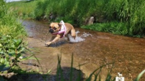 Monatspfoto – Hundeolympiade