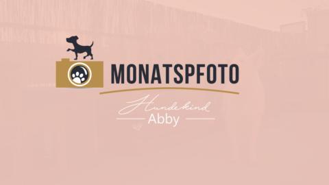 MONATSPFOTO JUNI