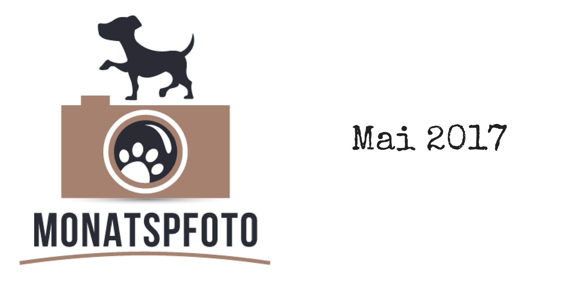 Monatspfoto Mai 2017 miDoggy Blog Community für Hunde