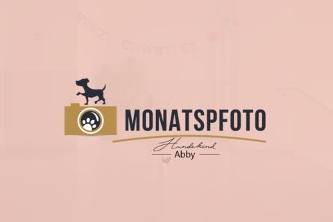 DAS MONATSPFOTO MAI