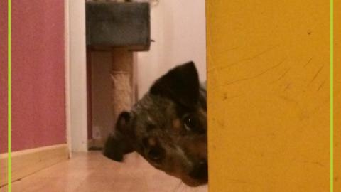 Hund allein daheim – wie klappt's?