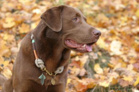 Welche Spielregeln braucht (m)ein Hund?