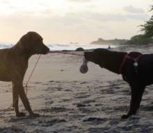Road Trip mit Hund: Beschäftigungstipps für unterwegs