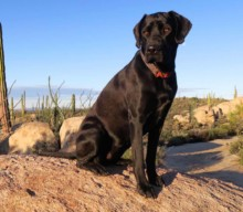 Nera's Reisetagebuch: 5 Lustige Hundegeschichten