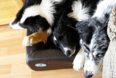 Nicht ohne meinen Hund – wenn man einfach keine Wohnung finden kann…