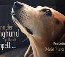 Wenn der Junghund plötzlich humpelt – OCD der Schulter
