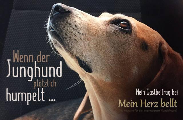 OCD-der-Schulter-beim-Junghund