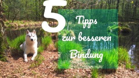 5 Tipps zur besseren Bindung