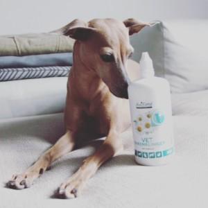 Ohrenpflege Hund