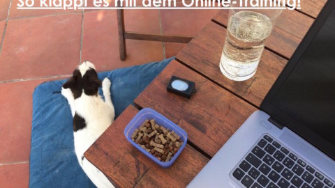 Online-Hundetraining? So klappt es!