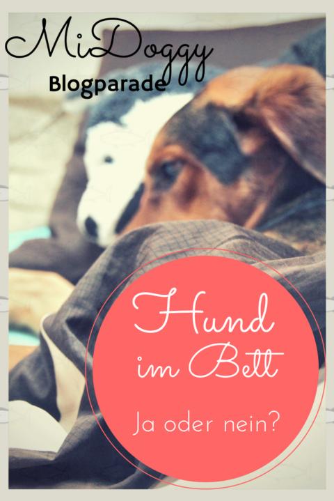 [MiDoggy Blogparade] Hund im Bett- ja oder nein?