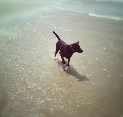 Urlaub mit Hund Teil 1 – Dänemark