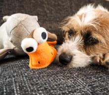 Wird man mit einem eigenen Haustier feinfühliger?