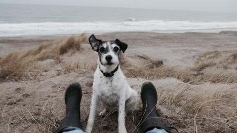 Konfliktcoaching – Geht das auch mit Hund?!
