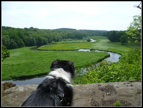 Backpacking mit Hund in Schweden – Teil 2