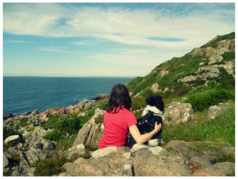 Zelten mit dem Hund – Tipps und Tricks