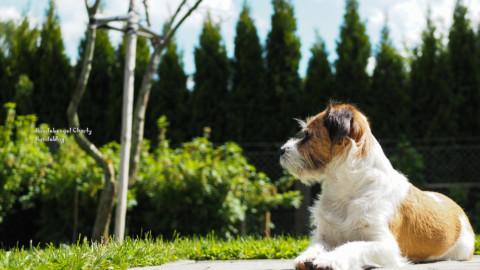 Kein Radau mehr am Gartenzaun – wie geht das?