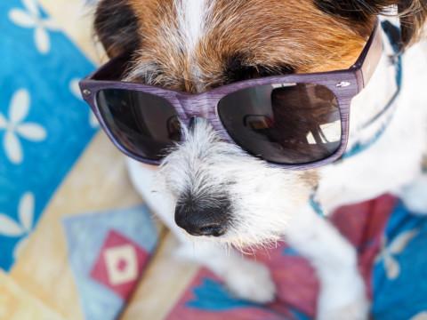 Auch Hunde haben jetzt hitzefrei!