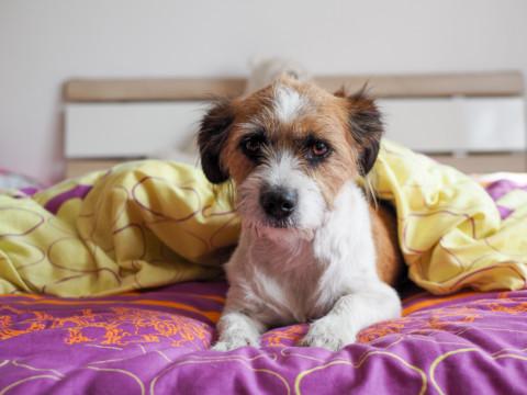 5 Gründe, warum ich heute Nacht wieder nicht durchschlafen werde!