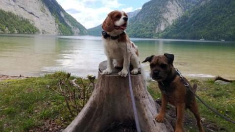 Urlaub mit Hund im Salzburger Land Teil 2