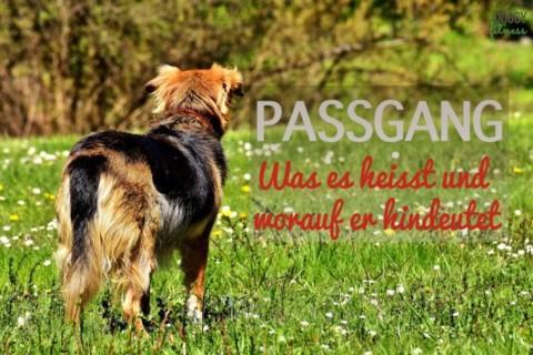 Passgang beim Hund – was es heisst und worauf er hindeutet