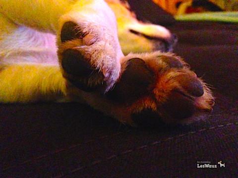 Die Wauziküre: Wie pflegt ihr Hundepfoten und welche Produkte sind empfehlenswert?