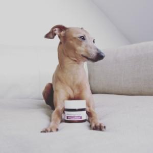 Pfotenpflege Hunde