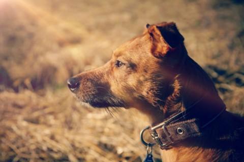 13 Tatsachen, die wirklich nur Hundebesitzer verstehen