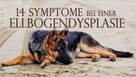 Die 14 wichtigsten Symptome bei einer Ellbogendysplasie