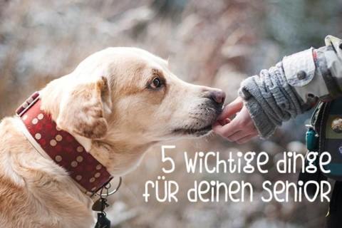 5 wichtige Dinge im Leben eines alten Hundes