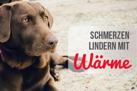 Schmerzfrei mit Wärme – so linderst du Schmerzen bei deinem Hund