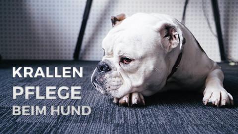 Schlechte Krallenpflege schadet den Gelenken deines Hundes!