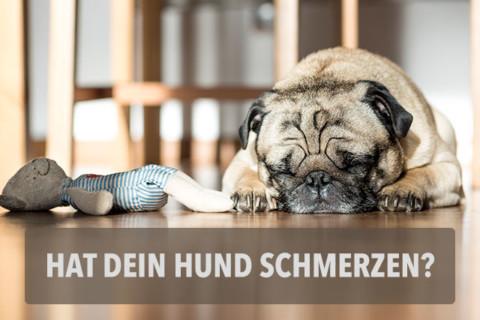 21 Punkte die dir verraten, ob dein Hund Schmerzen hat!