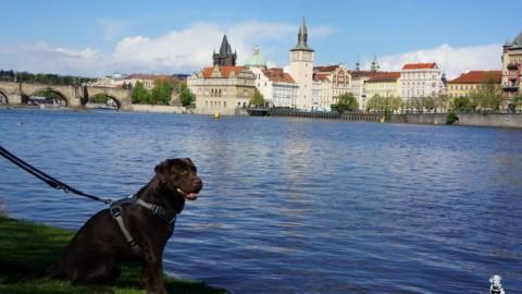 Ein Leipziger in Prag