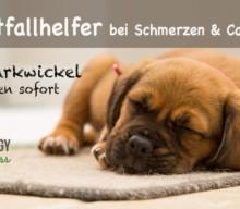Schneller Notfallhelfer bei Schmerzen und Co. – Quarkwickel beim Hund