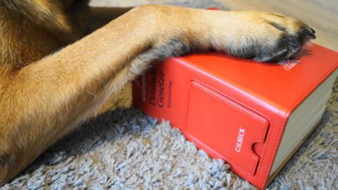 Hund beißt Kater tot – Einstufung als gefährlich