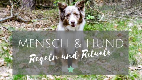 Regeln und Rituale im Zusammenleben mit Hund