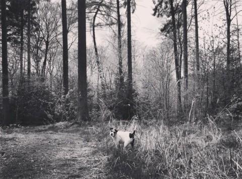 Mit der Bille durch den Wald